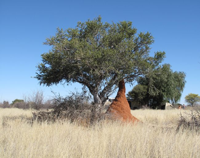 waterberg plateau termite mounds