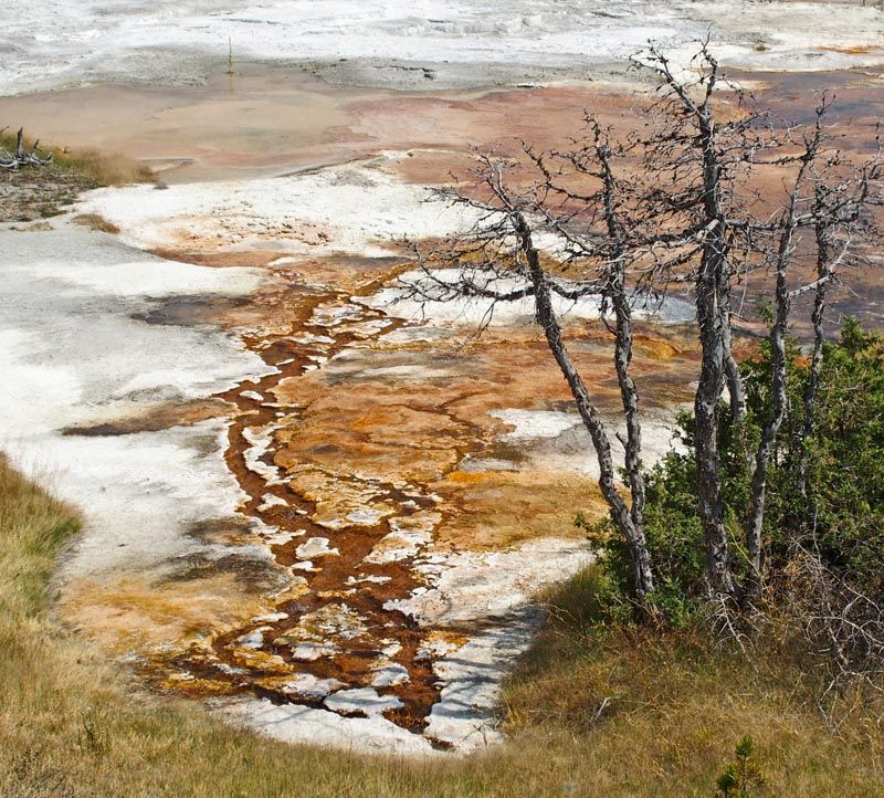 Mammoth Hot Springs Yellowstone Grassy spring