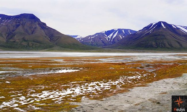 Svalbard landscape in summer
