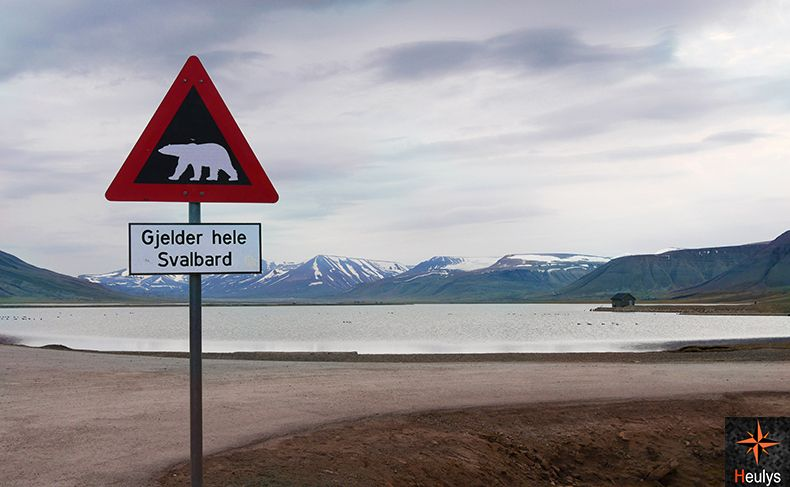 svalbard securite ours polaires longyearbyen