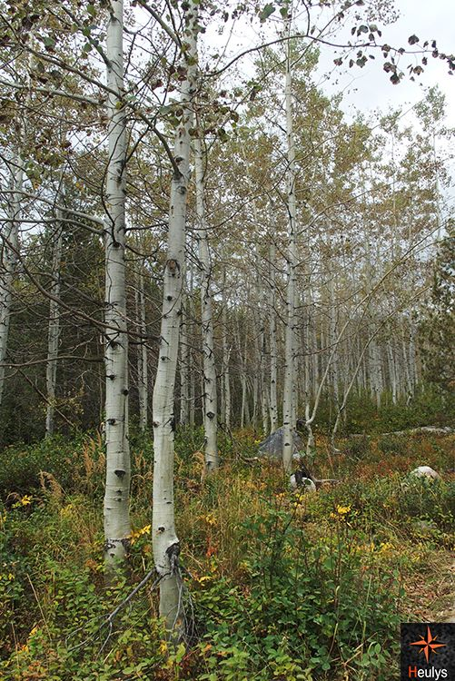 hiking aspen forest in grand teton national park